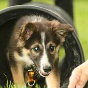 Jagility Hunde Gruppenausbildung by Karola Haufe