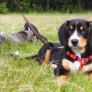 Hundeschule Bremerhaven mit Karola Haufe