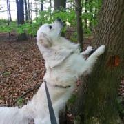 Nasenarbeit beim Hund mit Karola Haufe