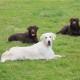 Adulte Hunde Gruppenausbildung by Karola Haufe