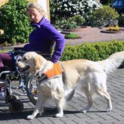Therapiebegleithund-Team Ausbildung by Karola Haufe