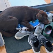 Workshop Gesellschaftsfähiger Hund